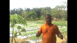 Vegetable Garden in the city. Growing crops in Metro Manila. Try it.