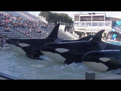 KW Up Close Kasatka Family - Dec 11 2015 - SeaWorld San Diego
