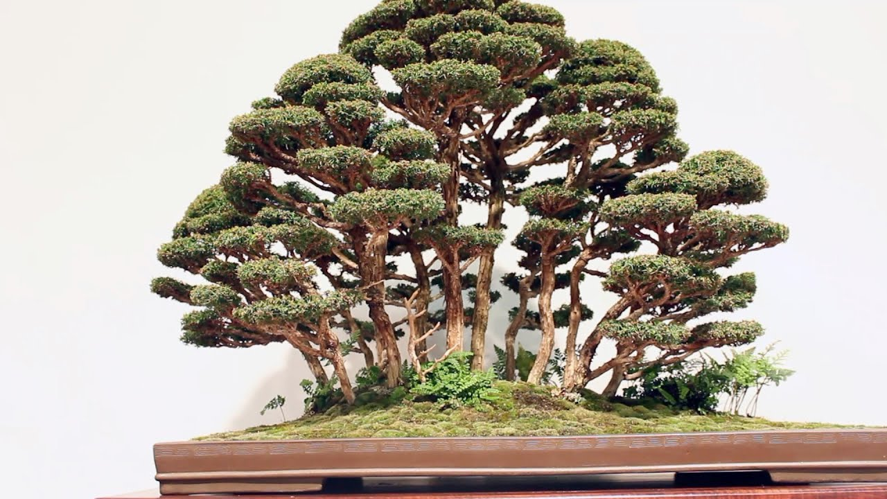Forest Bonsai Inspiration Youtube