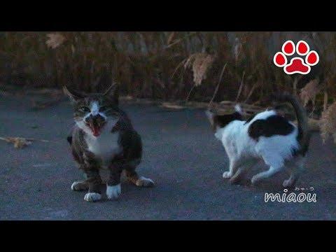 2018 11 7 野良猫達【瀬戸の野良日記】 Stray cat and kittens