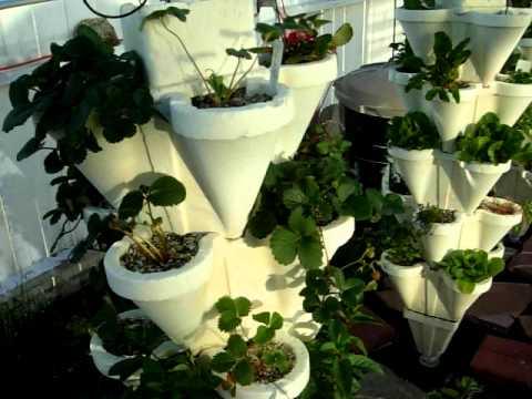 Kate's Hydro-Stacker Veggie Garden #4