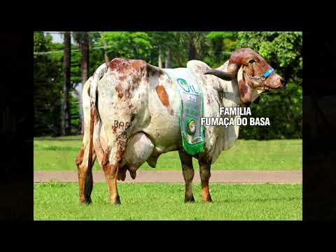 LOTE 69   MEGALOTE BABY -   4º LEILÃO FAMÍLIAS - DOMINGO, 13 DE JUNHO, 10HS - REMATEWEB PLUS