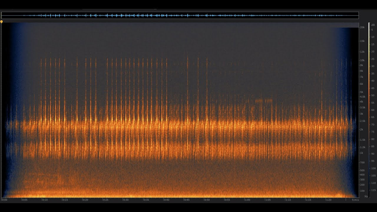 Sierran Tree Frogs: Santa Cruz Mountains, California | Spectrogram Follow