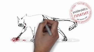 Нарисованные карандашом кошки  Как нарисовать дикую лесную кошку поэтапно простым карандашом