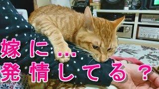 ウチの猫、嫁さんに発情してる(-.-)去勢しないと… thumbnail