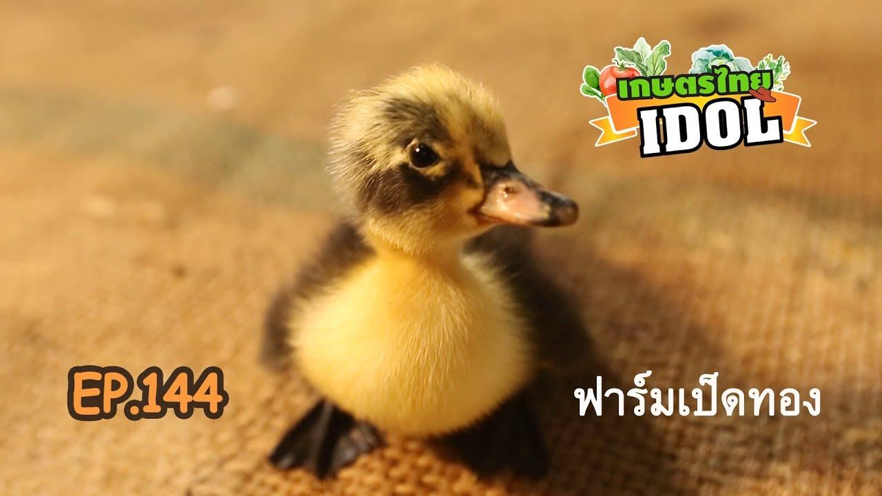 เกษตรไทยไอดอล Ep 144 ตอน ฟาร มเป ดทอง 19 ต ค 61 Youtube ฟาร ม เป ด