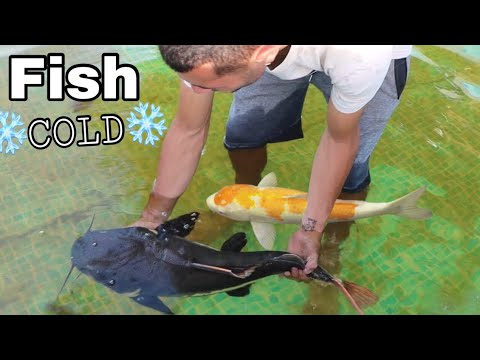 Training My Fish To SURVIVE The WINTER!  ** FREEZING COLD**
