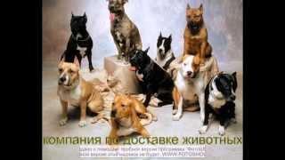 Доставка животных по России собаки, кошки и другие животные.