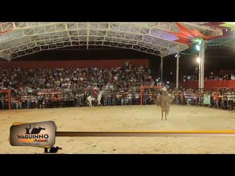 Waguinho Animal - Festa do Peão de Ouro Verde 31/03/18