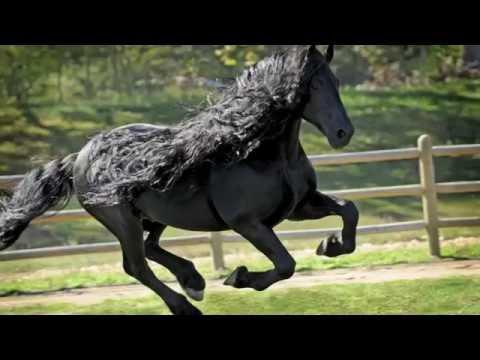 Il cavallo piu 39 bello del mondo youtube - I mobili piu belli del mondo ...