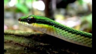 Bella Nicaragua - Paisajes, flora y fauna