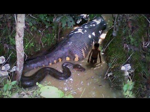 TOP 10 ANIMALES MÁS LETALES DEL AMAZONAS