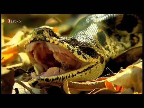 Madagaskar Tier & Natur Dokumentation HD