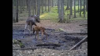 Obserwator 56: Leśne przedszkole / Forest kindergarten