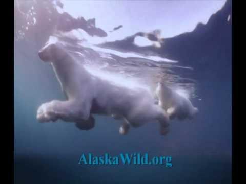 Wild Alaska, Pass It On! (Times Square Video)