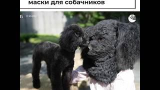 Суперреалистичные маски домашних животных