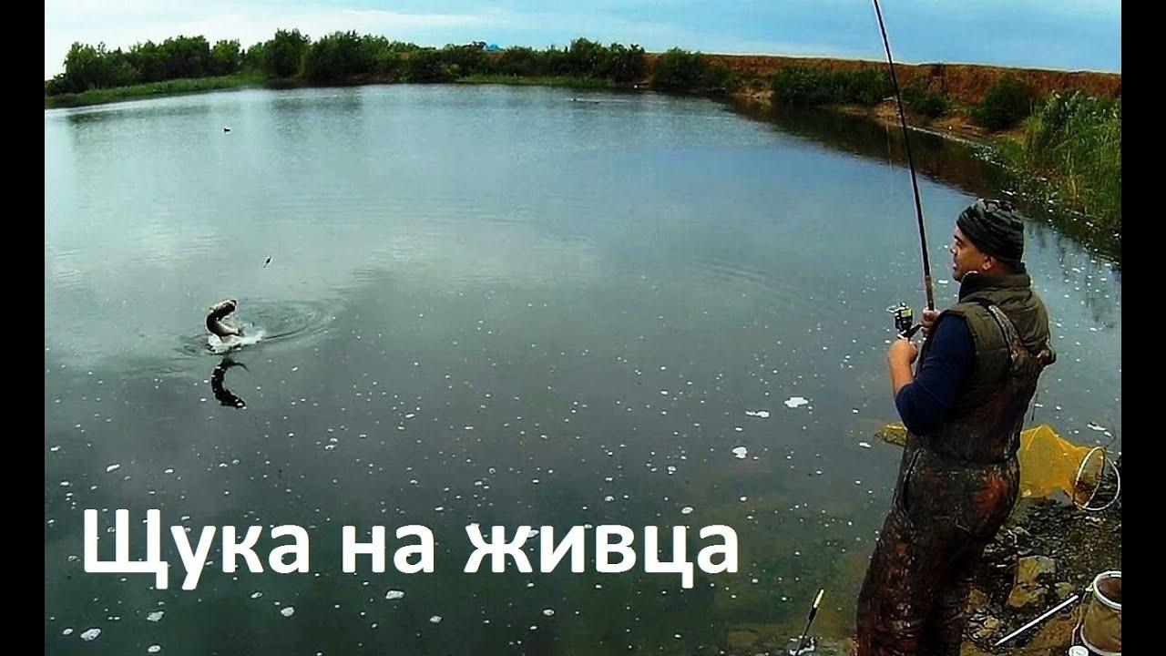 осенняя рыбалка на живца