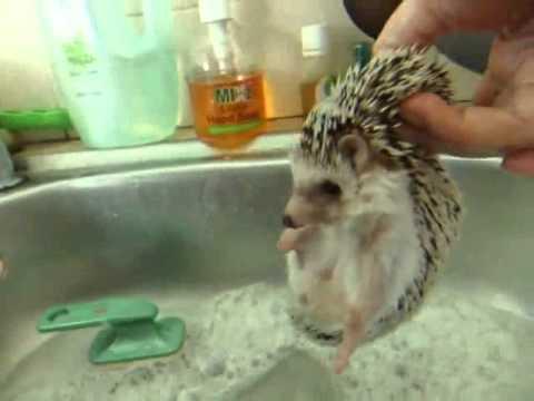 อาบน้ำดุ๋ย