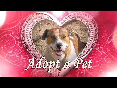 Broken Arrow Animal Shelter