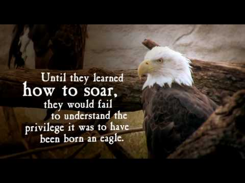 Fly War Eagle