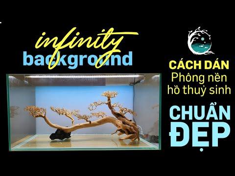 Hướng dẫn dán và chọn phông nền chuẩn đẹp cho hồ thuỷ sinh Infinity background - Quoidecor