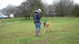 Outdoor Dog Training Workshops. Recall, Lead Pulling, Jumping. Adolescent Dogs