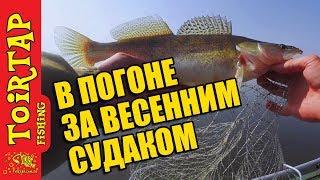 Рыбалка на СУДАКА! Ловля судака весной на приманки TOIRTAP!!!!