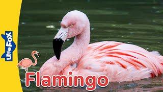 Meet the Animals | Flamingo | Birds | Stories for Kindergarten