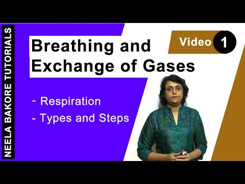 Breathing And Exchange Of Gases - Respiration - Types And Steps