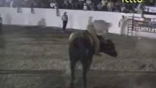 JARPEO ARAÑA VS EL ALACRAN.wmv