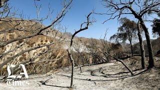 Burn scars, winter storms threaten rare and endangered species in San Gabriel Mountains