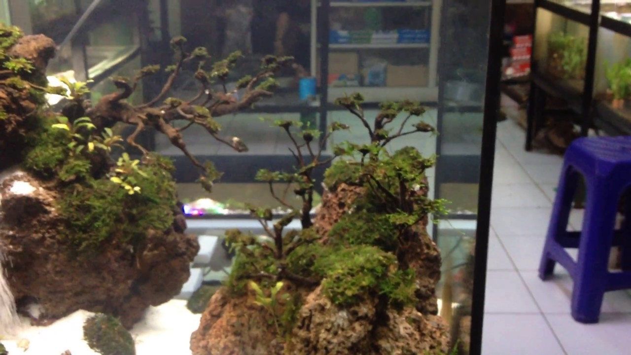 sand waterfall aquascape by mcn aquascape indonesia
