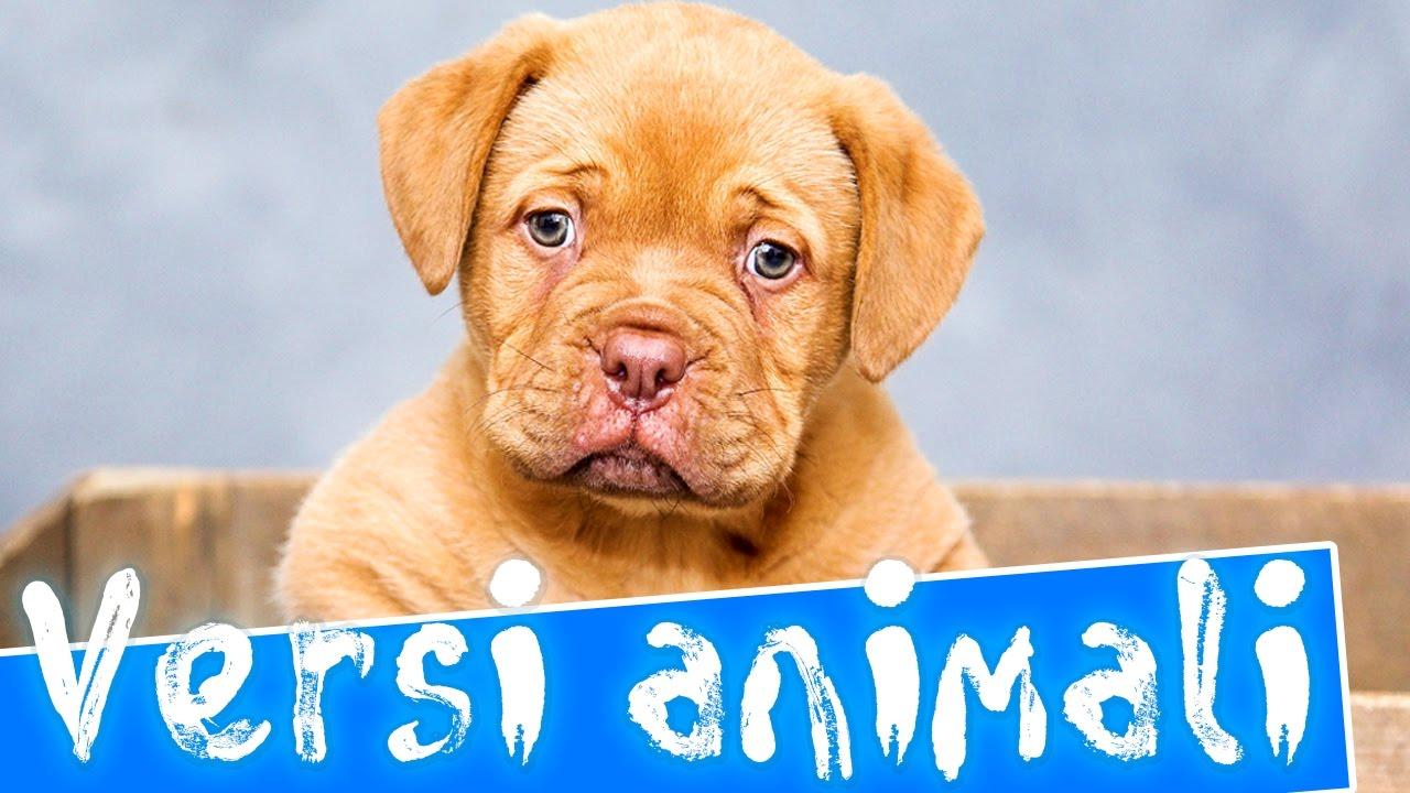 Versi animali per bambini i nomi pronunciate in italiano - Animali terrestri per bambini ...