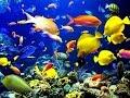 Liat Ikan-Ikan Di Laut Langsung
