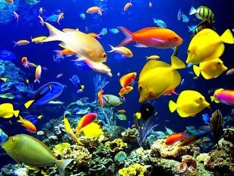Unduh 93 Gambar Ikan Bergerak Terbaru