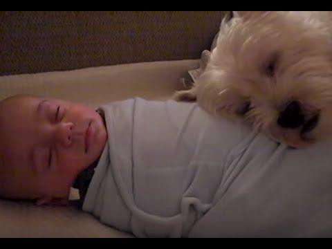 赤ちゃんと犬がかわいい【感動】dog baby cute videos