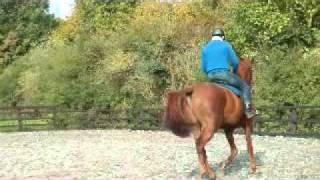 Michael Peace - helping problem horses
