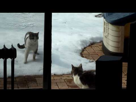 Chaton the cat reunites with his mother Pinky