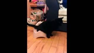 Cat Uses Baby Toilet