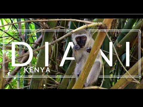 My Adventures in Diani, Kenya (Travel Vlog)