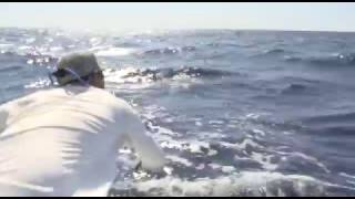 2016 Bisbee's Black & Blue - Team Reel Gold - Blue Marlin