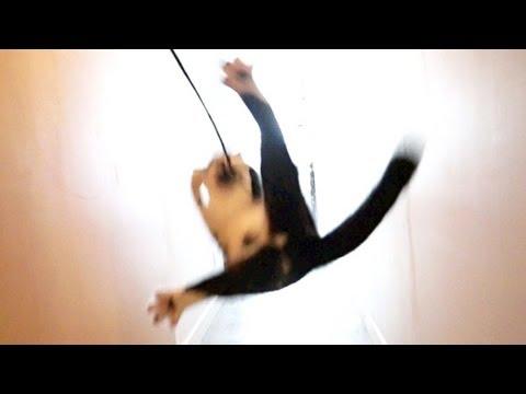 The Amazing Flying Kodi!