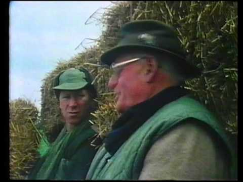 Archie Coats - Pigeon Shooting (Jack's Game)