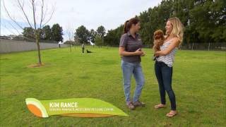 Wa Weekender Ep2 Doggiewould Dog Training