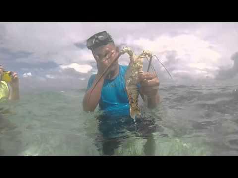 Sharks and stingray excursion Belize