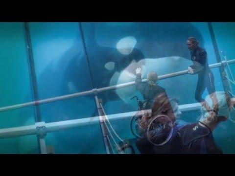 Soigneur dauphins, l'expérience inédite !