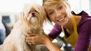 США 1378: как живут в США кошки, собаки, и другие домашние животные