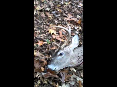 Deer hunting Arkansas 2013 modern gun in star city