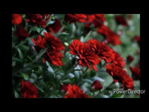 Clemson & Clover By Tommy James Lyrics Video