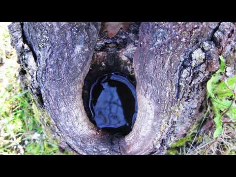 Как лечить дерево (сломанные ветки, дупло, морозобоины, поврежденная кора)